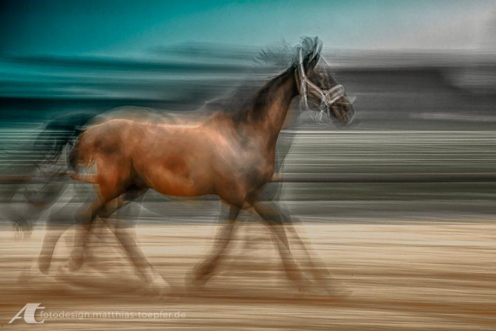 slow-shutter-speed-Tiere-01