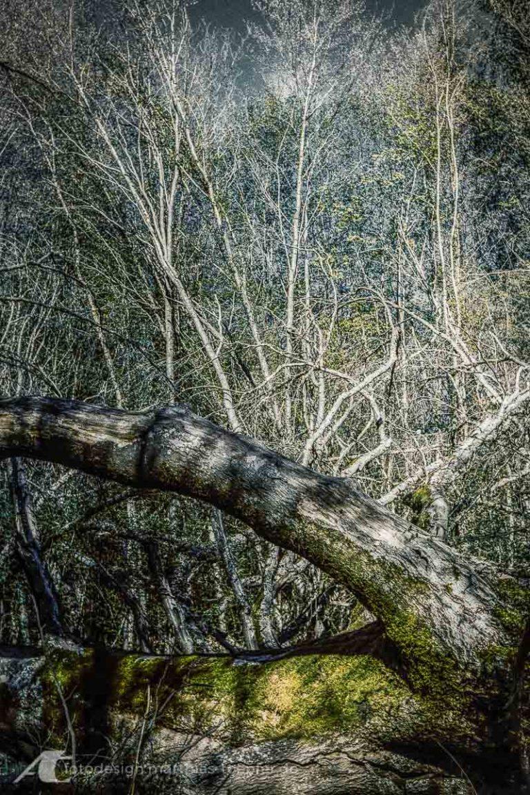 Aufgenommen mit einer Contessa 35 auf Kodak Pro Image 100 nachbearbeitet in Adobe Lightroom und Affinity Foto